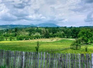 Bando per il territorio di pianura e collina esterno alle Comunità Montane- approvazione delle disposizioni attuative per la creazione di nuovi boschi miglioramento dei boschi esistenti  e sistemazioni Idraulico forestali
