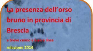 Copertina del documento Rapporto sulla presenza dell'orso bruno in provincia di Brescia e breve cenno a lupo e lince