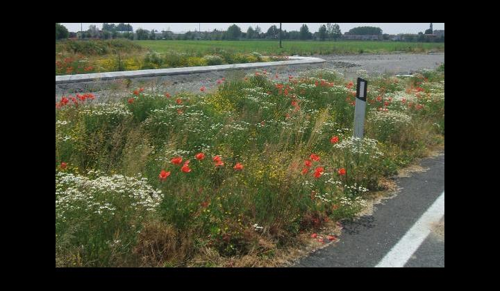 SPBS 235 - Variante (Orzivecchi) - Bouquet di fiori in cantiere - 8