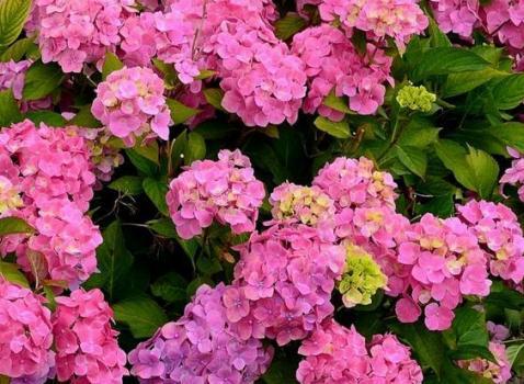Darfo Boario Terme in Fiore - il fiore nell'Arte